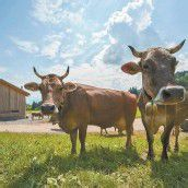 Land streckt den Bauern die Alpungsprämie vor