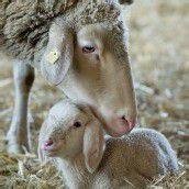 Schmusen mit Mama