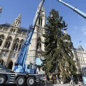 Weihnachtsstimmung in Wien