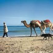 Tunesiens Sonneninsel im Mittelmeer