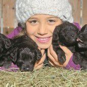 Vier süße Hundewelpen suchen ein neues Zuhause