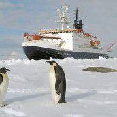 Antarktis erwärmt sich ungewöhnlich stark
