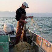 Die Bodenseefischerei auf dem Tiefstand