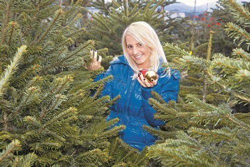 Der Tannenhof Wohlgenannt bietet den VN-Abonnenten eine Auswahl der schönsten Christbäume zum Vorteilspreis. Foto: VN/Paulitsch