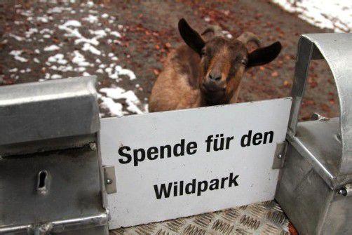 Für die Erneuerung des Murmeltier- und Fuchsgeheges bittet der Wildparkverein um Spenden. Foto: Koe