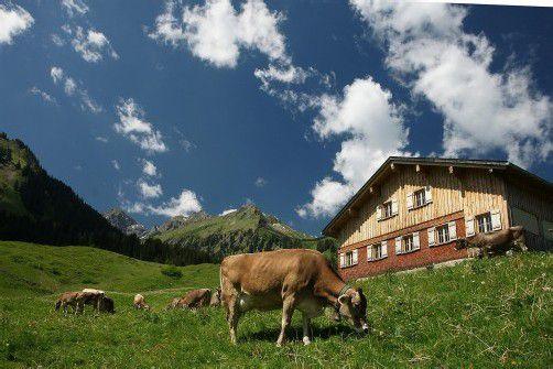 Keine Strafen für jene, die Alpflächen richtigstellen. Foto: Berchtold