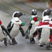 Weihnachtsstimmung . . .