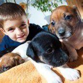 Hundebabys suchen ein Zuhause