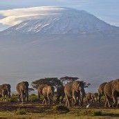 Elefanten-Karawane in Afrika