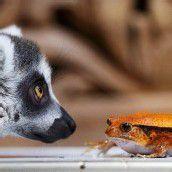 Tier-Inventur im Hagenbeck-Zoo