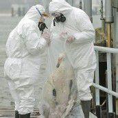Vogelgrippe-Alarm in Indonesien