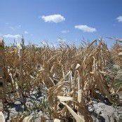 Brasilien macht eine große Dürre zu schaffen