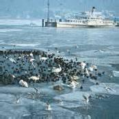 Erinnerungen an die Seegfrörne