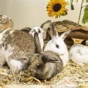 Tieren Liebe und ein Zuhause schenken