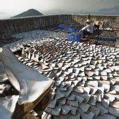 Das verborgene Geschäft mit den Haifischflossen