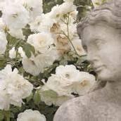 Ein Rosengarten und was sonst sticht