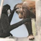 Affige Freundschaft