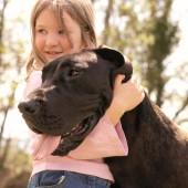 Der richtige Umgang mit Hunden