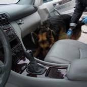 Drogenspürhund Yambo entlarvte Schmuggler