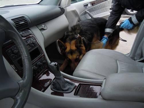 """Ein feines Näschen: Drogenspürhund """"Yambo"""" erschnüffelte im Auto eines 20-jährigen Oberländers 120 Gramm Cannabis. Foto: bmf"""