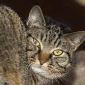 Liebe Schmusekatzen