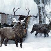 Landesrat Schwärzler will jetzt mehr Wild-Abschüsse