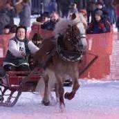 Spaß beim Pferdeskijöring