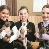 Tonkanesen-Kätzchen in Lochau abzugeben