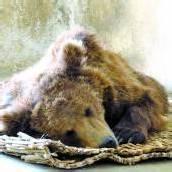 Braunbär Baloo ist frei