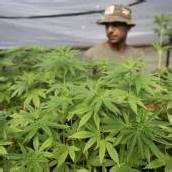 Vorarlberger in Thailand wegen Drogen verhaftet