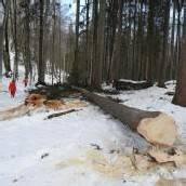 Forstarbeiter (42) wurde lebensgefährlich verletzt