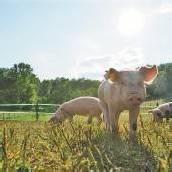 Nur die regionale, kleinstrukturierte Landwirtschaft ist krisensicher