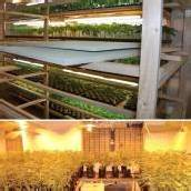 Hanfplantage in Wien entdeckt