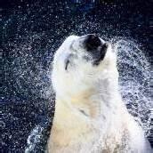 Kein guter Tag für Tiger, Eisbären und Haie