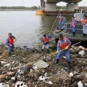 Rätsel um tote Schweine in Schanghais Stadtfluss