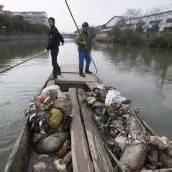 13.000 Schweine aus Fluss gefischt