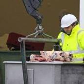 Illegales Fleisch von Schafen entdeckt