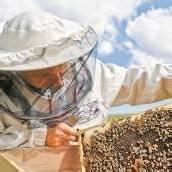 Das weltweite Sterben der Bienenvölker