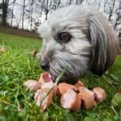 63-Jähriger tötete Hunde mit vergiftetem Fleisch