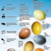 Warum der Hase Eier bringt