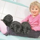 Preisverdächtiger Hundenachwuchs