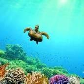 Unterwasserwelt im Roten Meer entdecken