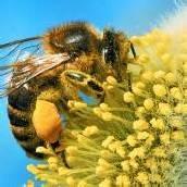 Voller Einsatz für die Bienen