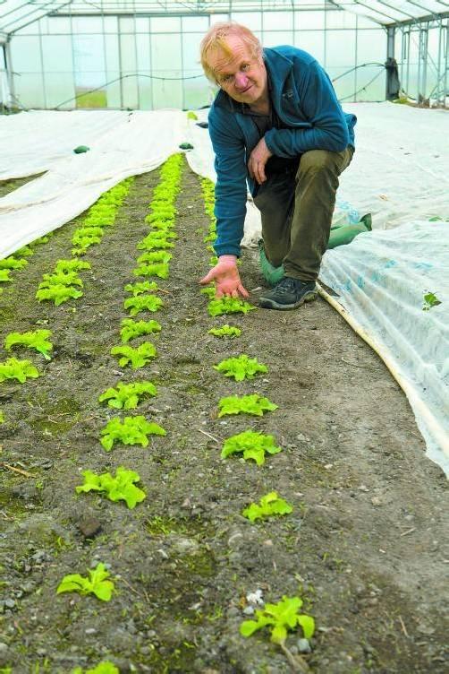 Dieser Salat ist noch ein Winzling und muss noch gehörig wachsen: Noch verzagt Hubert Vetter jedoch nicht. Foto: VN/Hartinger