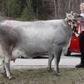 27 Züchter bei Ausstellung in der Alpenstadt