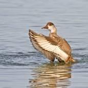 Vogelkunde im Rheindelta