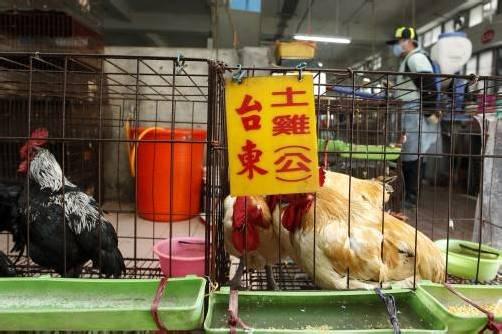 Mit Desinfektionsmittel werden Hühnerställe in China derzeit zum Schutz vor dem H7N9-Virus desinfiziert. Foto: REUTERS