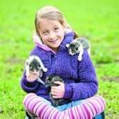 Kleine Schmusekatzen