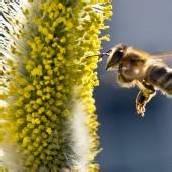 Bienensterben: Sondersitzung zeichnet sich ab