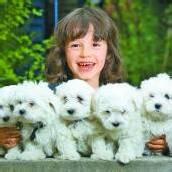 Süßer Hundenachwuchs sucht neues Zuhause